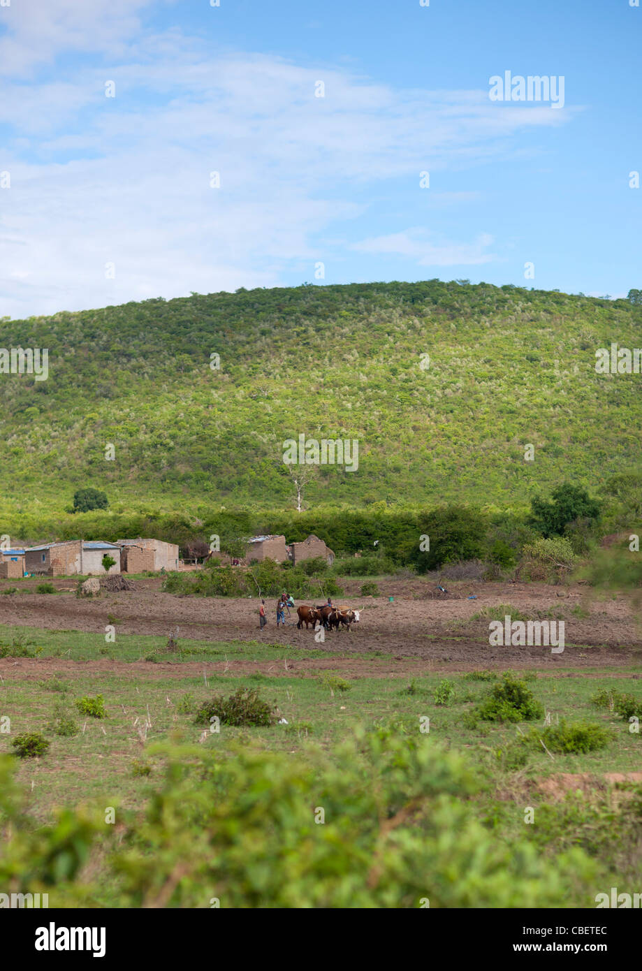 People Ploughing A Field Near Their Village, Lubango Area, Angola - Stock Image
