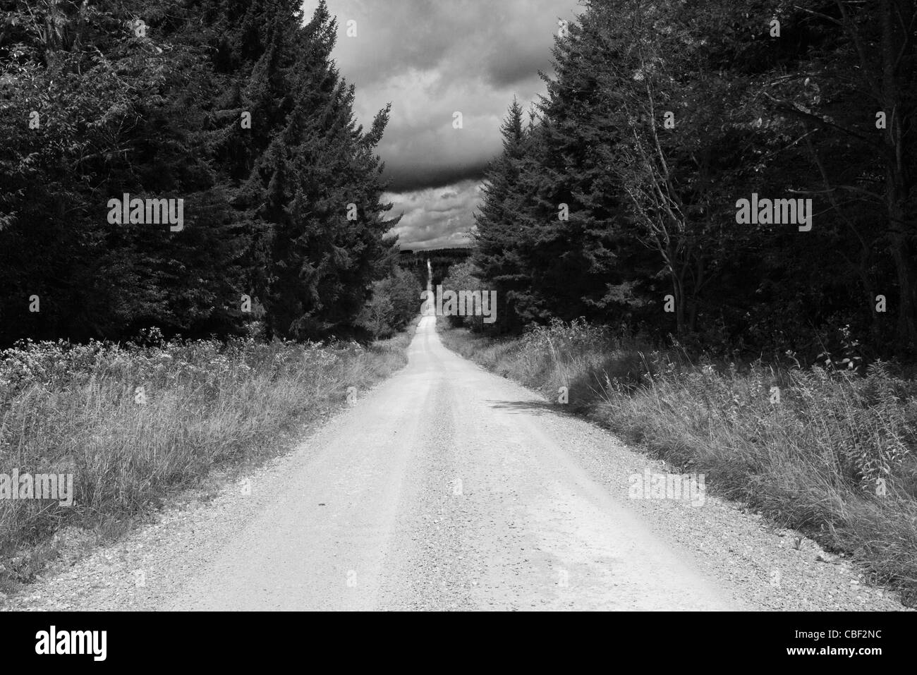 A nearly deserted dirt road running along the eastern boundary of the Dolly Sods Wilderness Area in West Virginia. - Stock Image