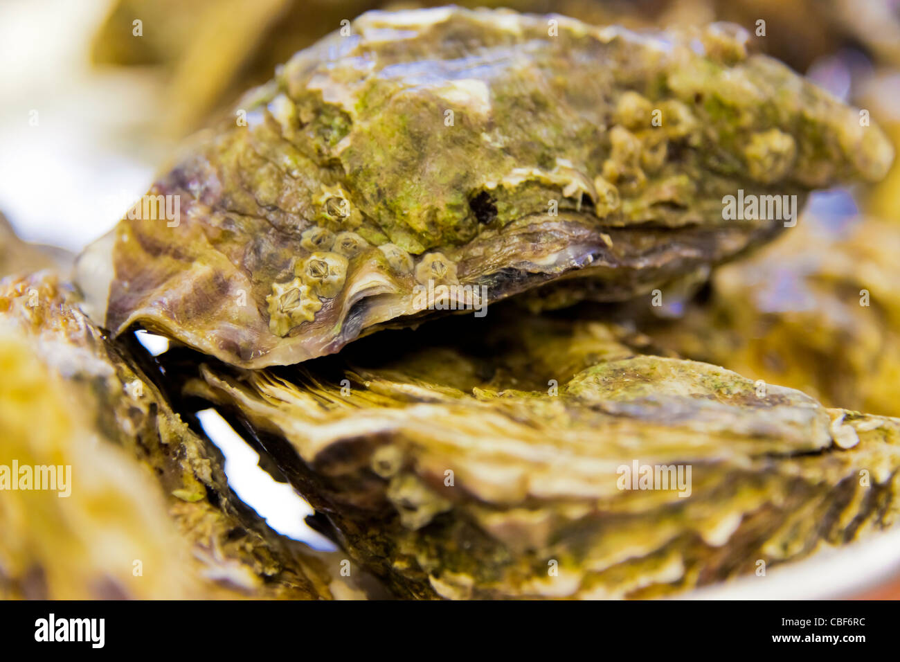 Details of a closed oyster., HOTEL DU CASTELLET,5 stud Relay and Castle in Provence 3001 Route des Hauts du camp - Stock Image