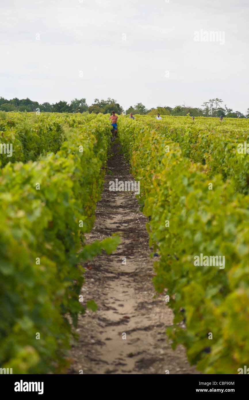 Wine growers in the vineyards., The Château Margaux wine waits 25 months in wooden barrel, from various and - Stock Image