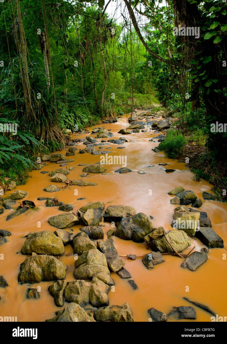 Small Muddy River In N Dalatando Botanical Garden, Angola - Stock Image