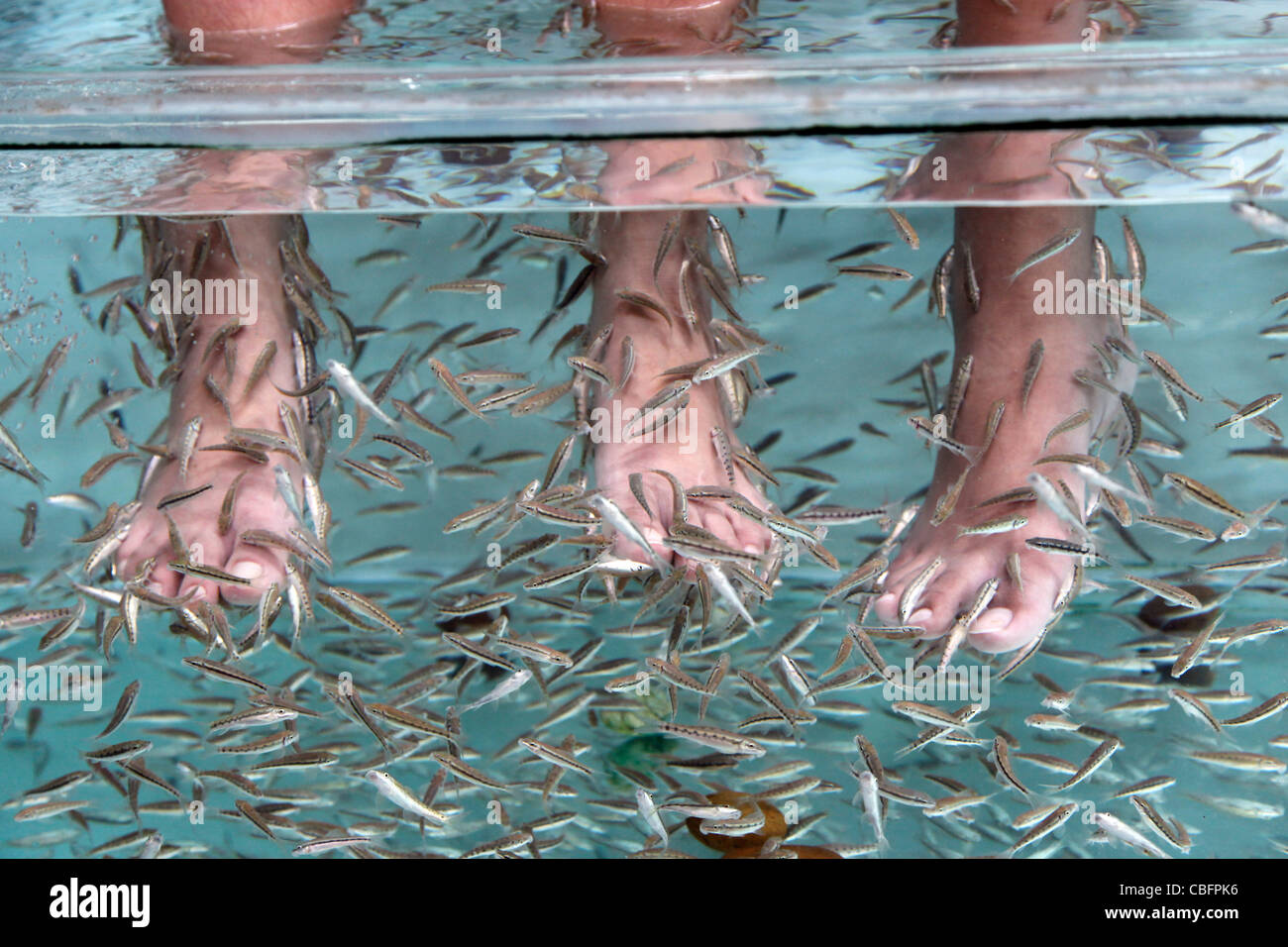Fish spa therapy treatment showing people sitting with their feet and legs in a water tank with fish eating dead - Stock Image