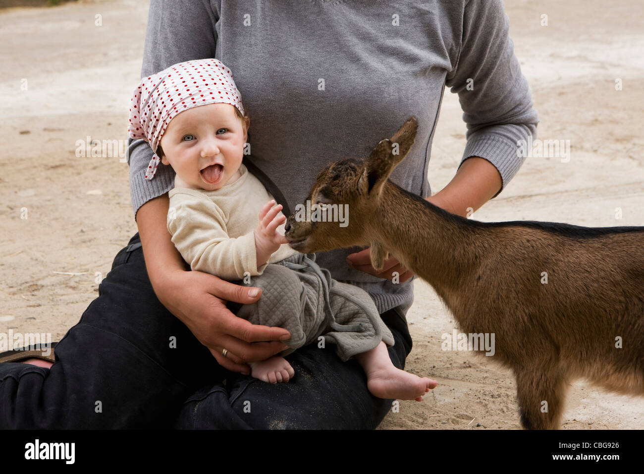 A goat nibbling on a baby's finger - Stock Image