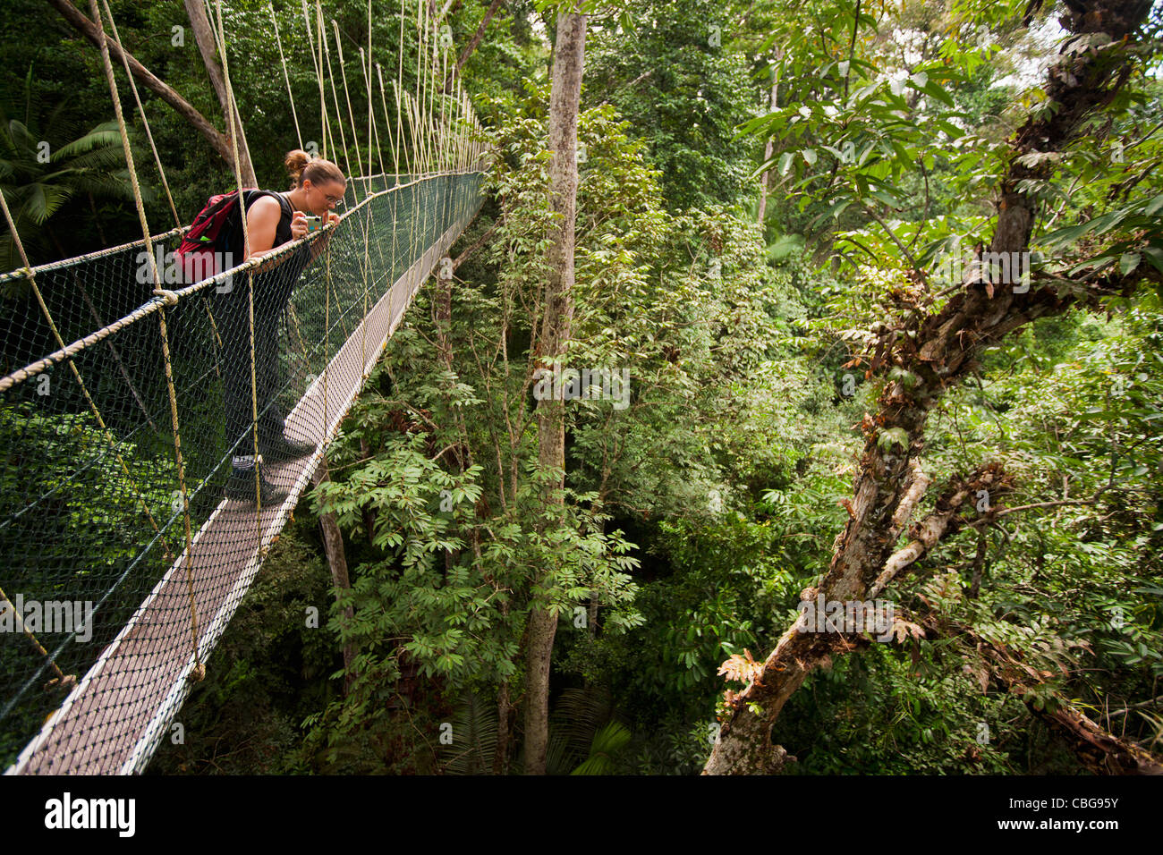 A woman looking down from a tree canopy walkway, Teman Negara National Park, Malaysia - Stock Image