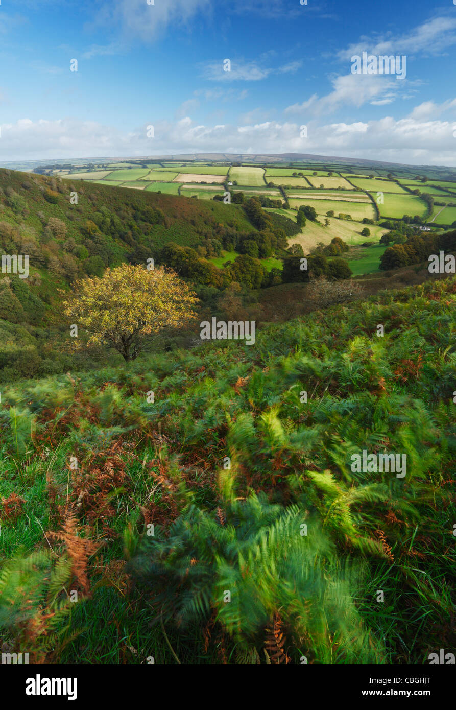 The Punchbowl on Winsford Hill. Exmoor National Park. Somerset. England. UK. - Stock Image