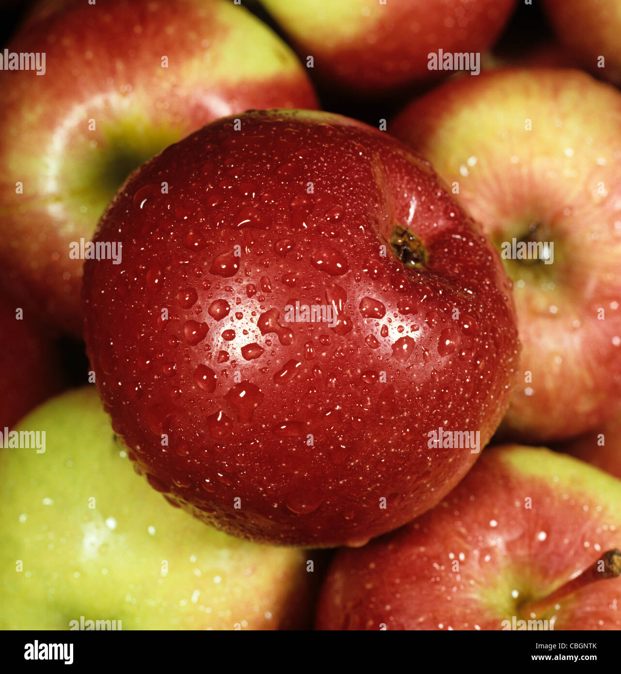 Apple fruit, a Canadian variety, ex shop, with water droplets - Stock Image