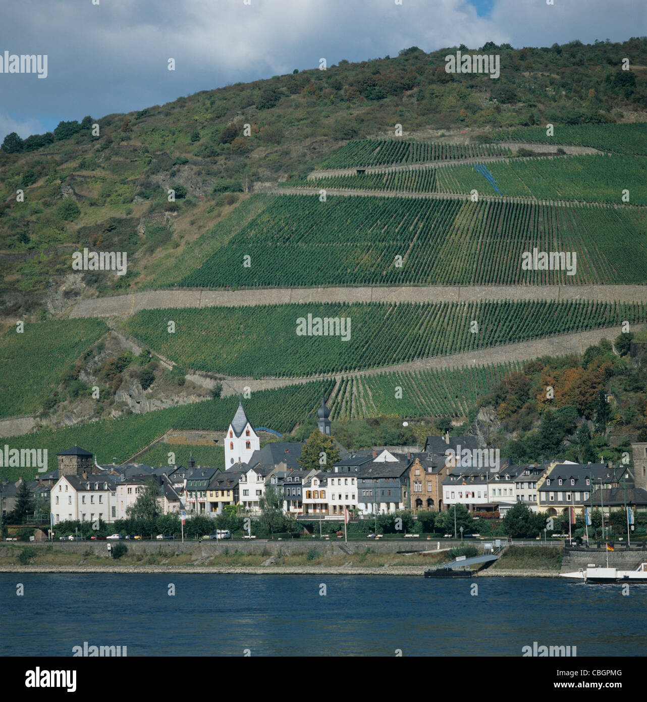 Vineyards above the village of Kaub in the Rhine Valley, Germany - Stock Image