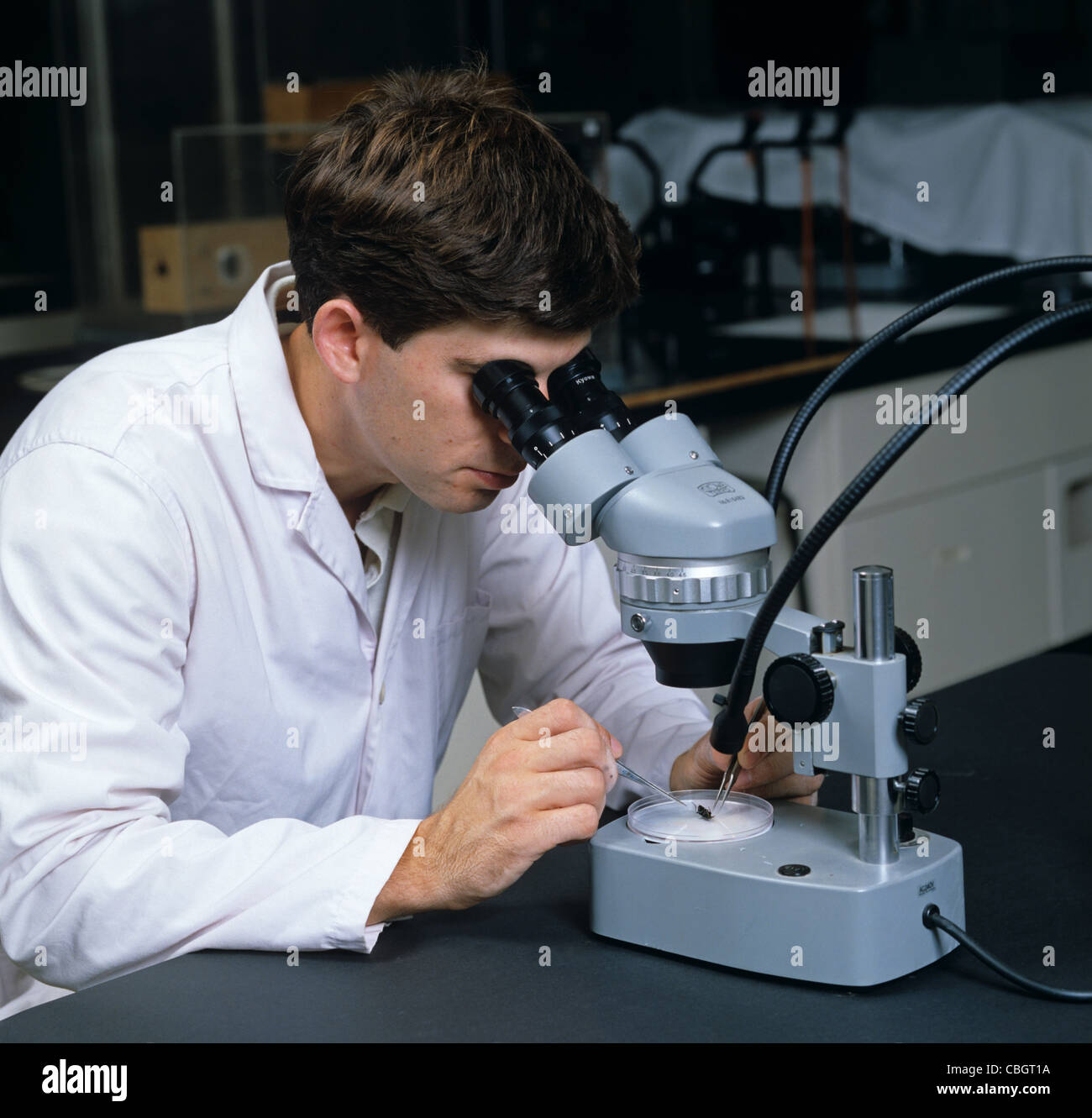 Researcher studying through low power binocular microscope in laboratory - Stock Image