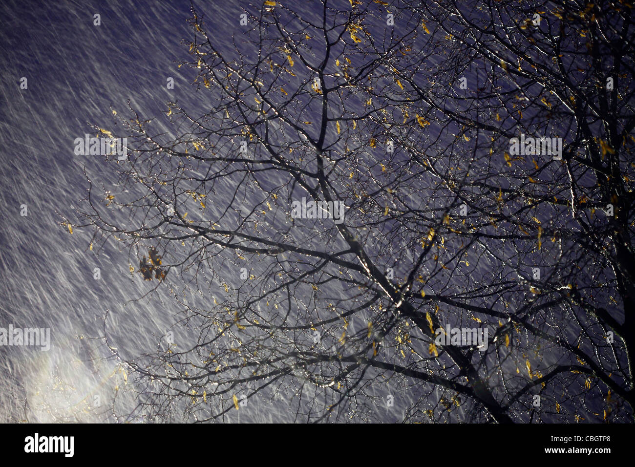 Heavy rain and snow-rain storm, tree moves in the wind, at night. - Stock Image