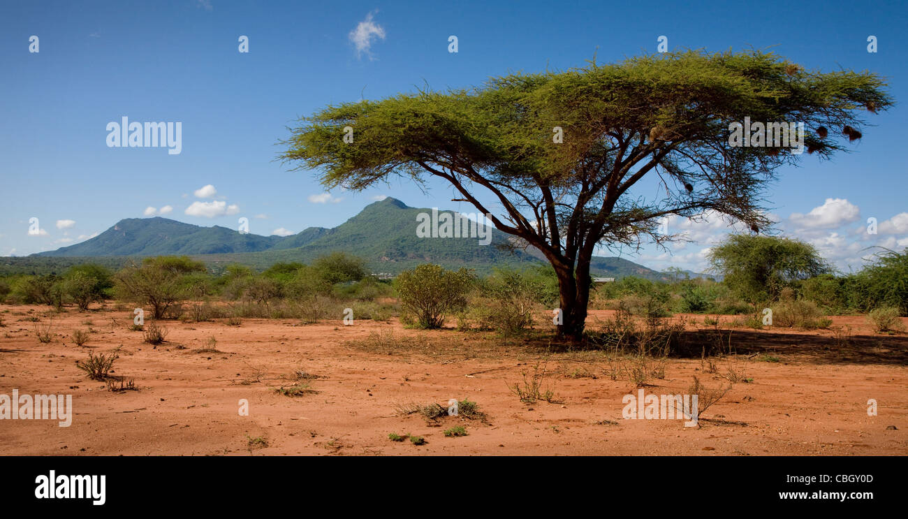 View of the Sagalla Hills in Southern Kenya near the town of Voi seen from the Ndara Plain - Stock Image