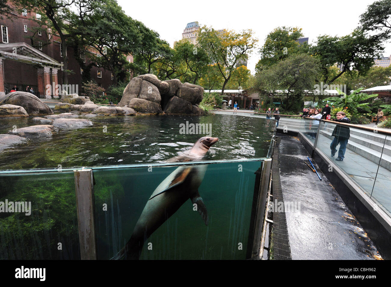 zoo new york sea lion stock photos zoo new york sea lion stock