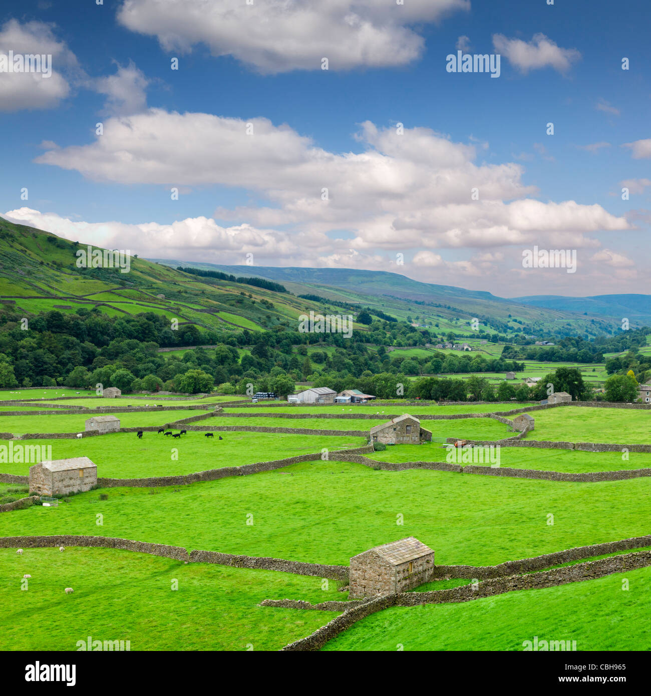 A peaceful scene in Swaledale, North Yorkshire, England, with farmland, barns and dry stone walls. - Stock Image