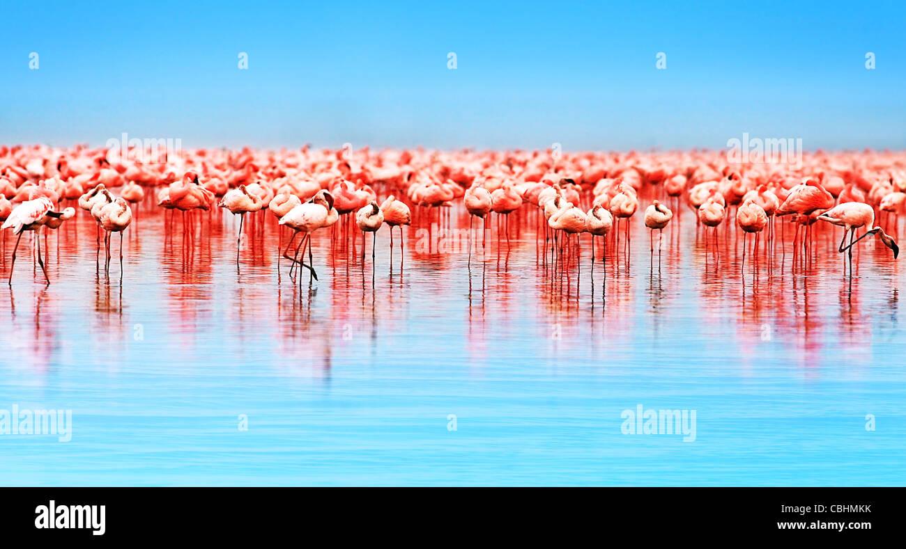 Flamingo birds in the lake Nakuru, African safari, Kenya - Stock Image