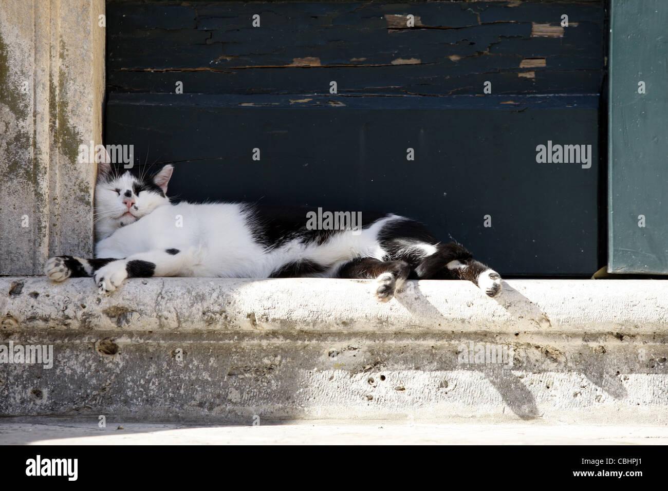 CAT NAPS IN DOORWAY OLD TOWN DUBROVNIK CROATIA 05 October 2011 - Stock Image