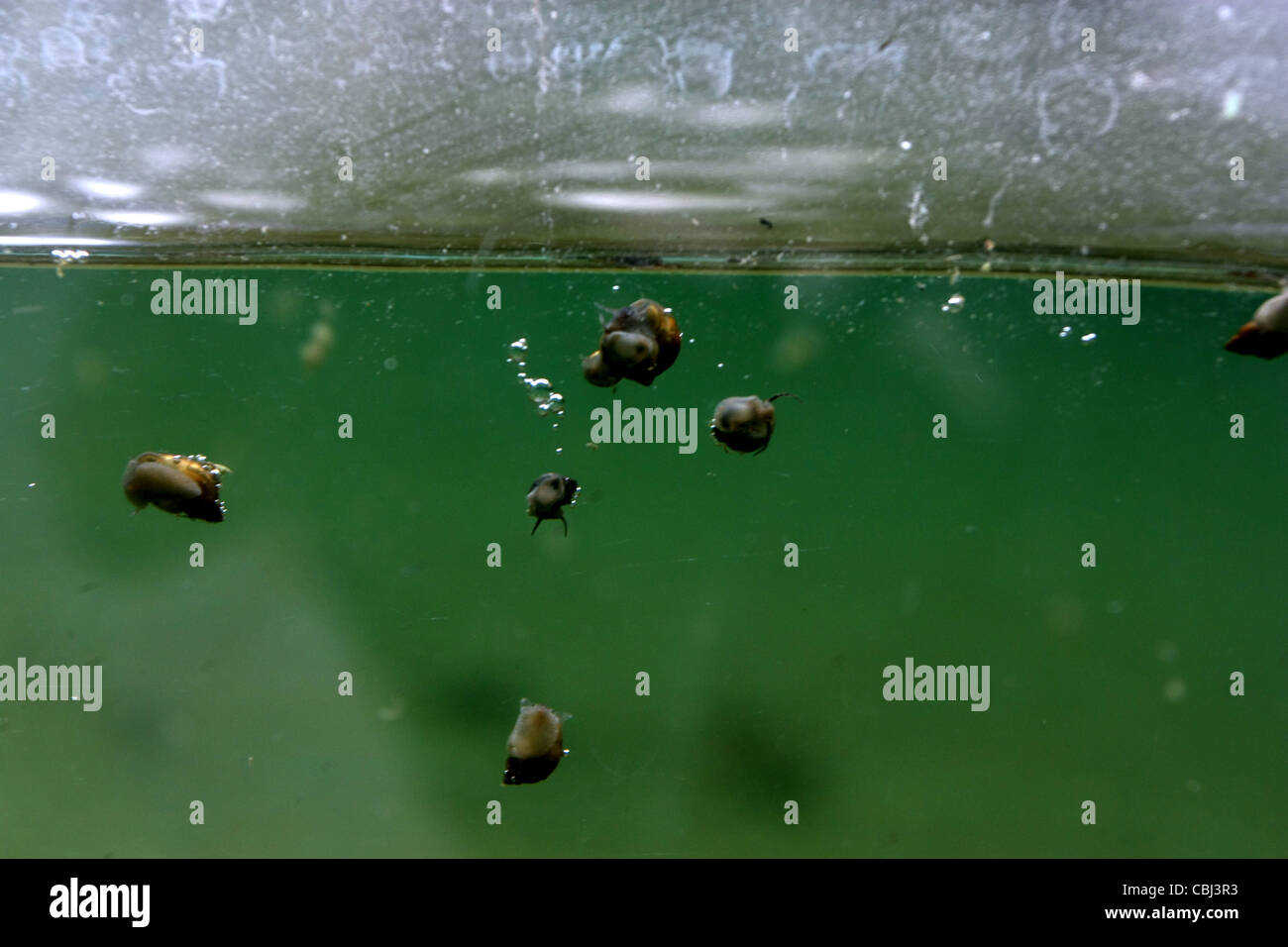 Microbial pool - Stock Image