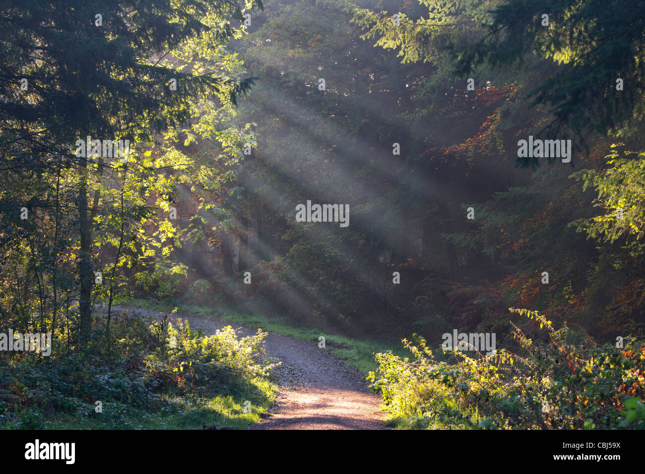 Early morning sunrays through trees Stock Photo