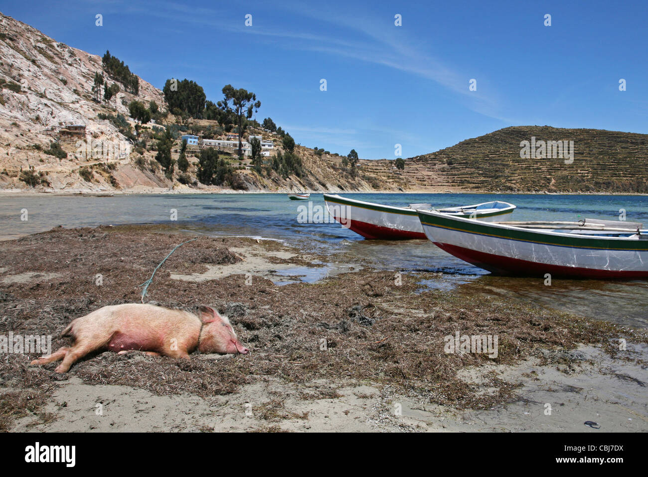 Fishing boats and pig sleeping on shore of Lake Titicaca, Isla del Sol, Bolivia - Stock Image