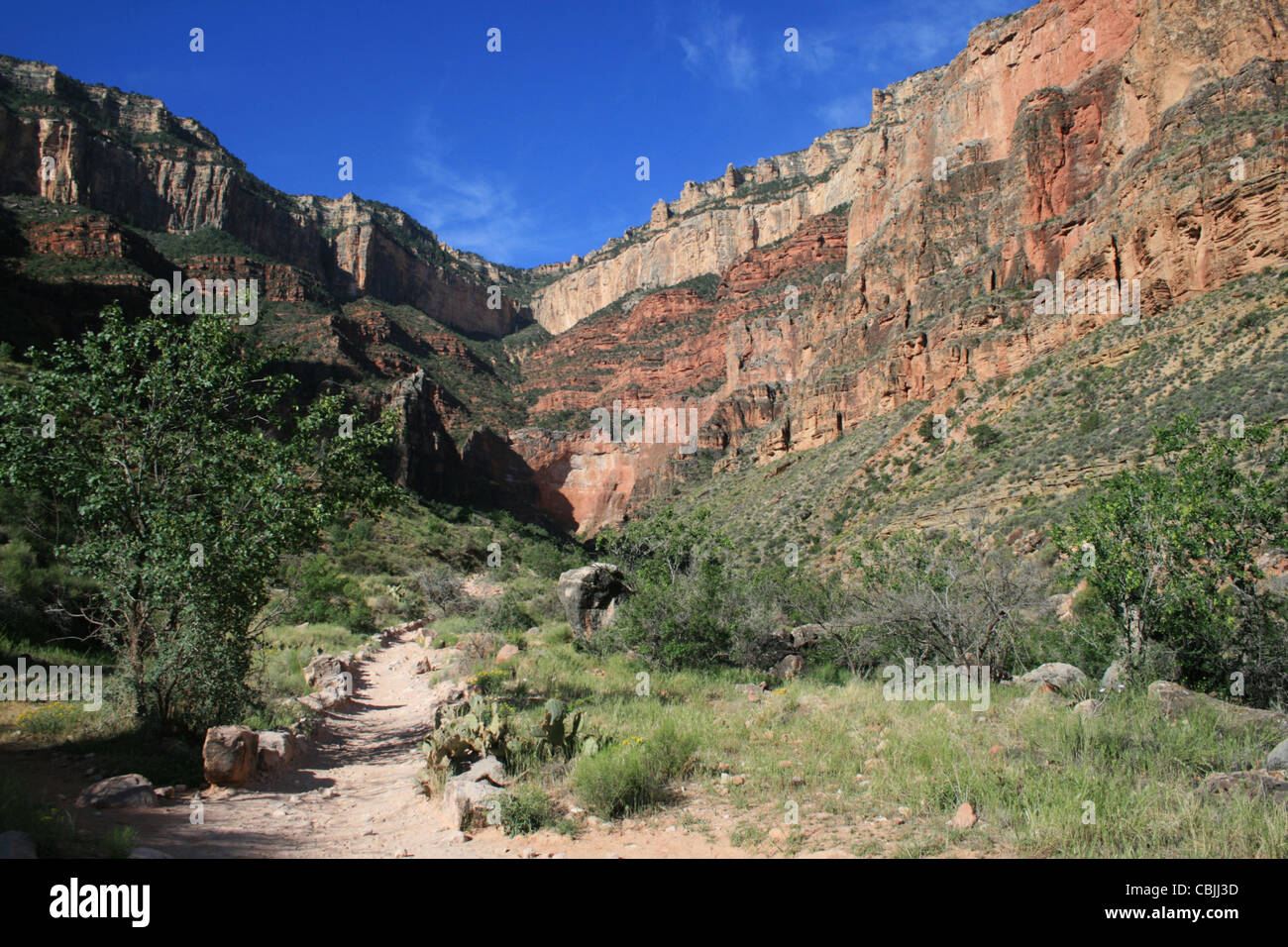 View up to south rim of the Grand Canyon from near Indian Gardens along the Bright Angel Trail in the Grand Canyon Stock Photo