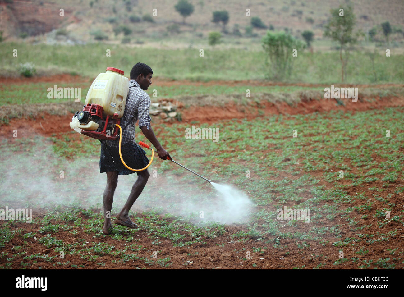 Indian man spraying pesticide unprotected Andhra Pradesh South India - Stock Image
