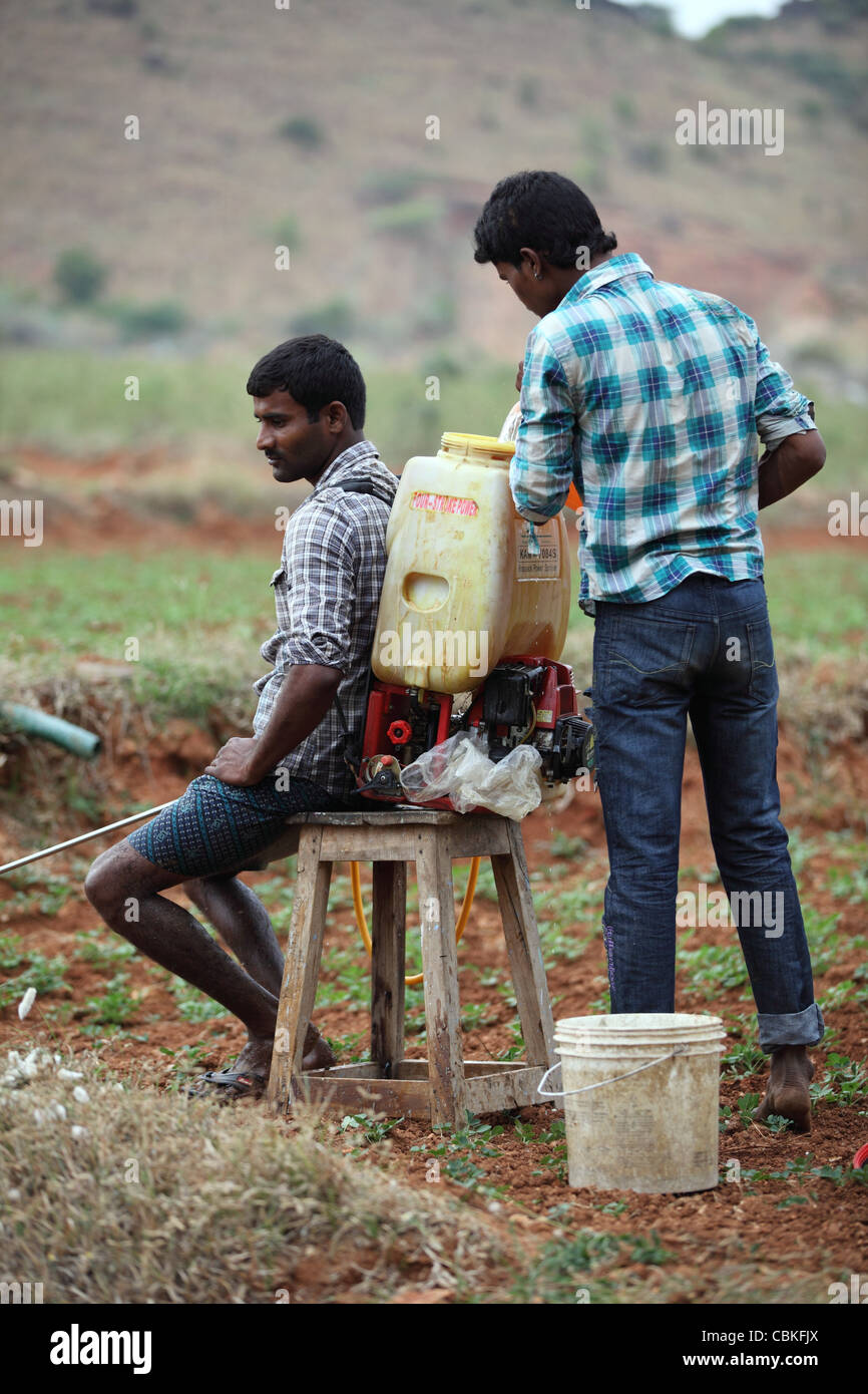 Indian men with pesticide unprotected Andhra Pradesh South India - Stock Image