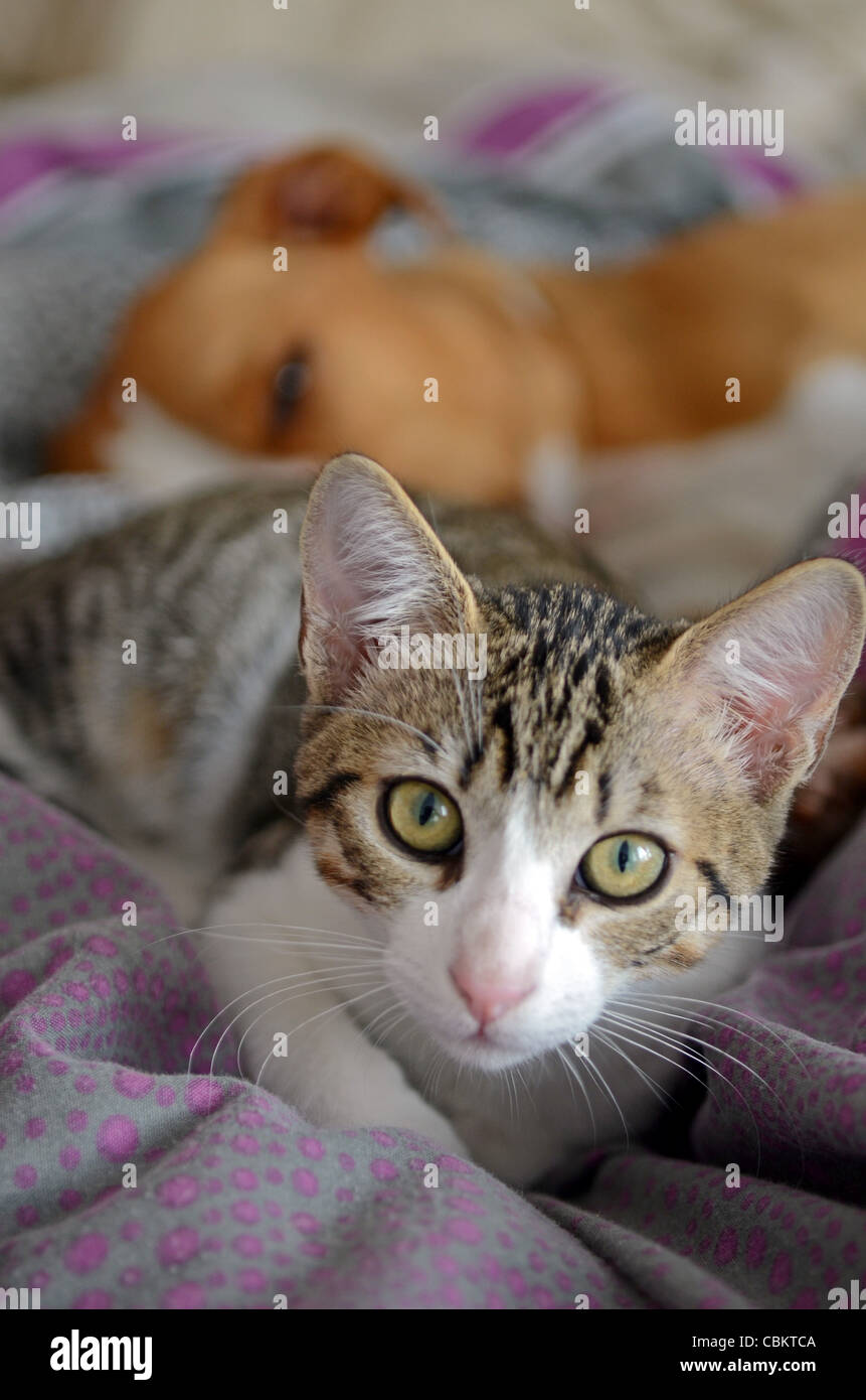 Dog and Kitten interact at home - Stock Image
