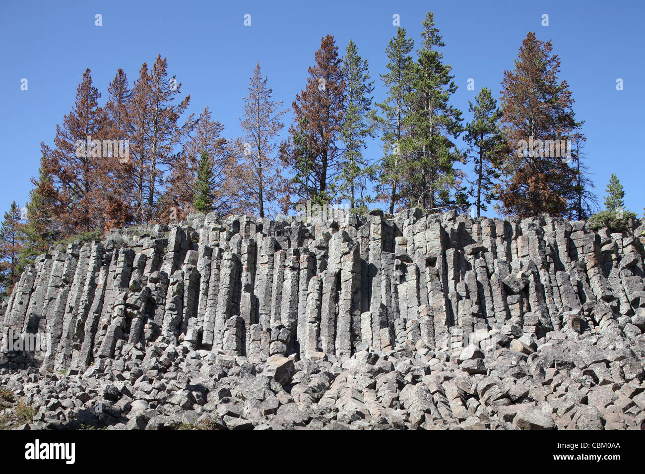 Basalt Columns formed by cooling lava, Sheepeater Cliffs, Yellowstone Caldera, Yellowstone National Park, Wyoming. - Stock Image