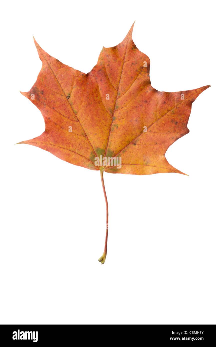 fallen leaves - colours of autumn Stock Photo
