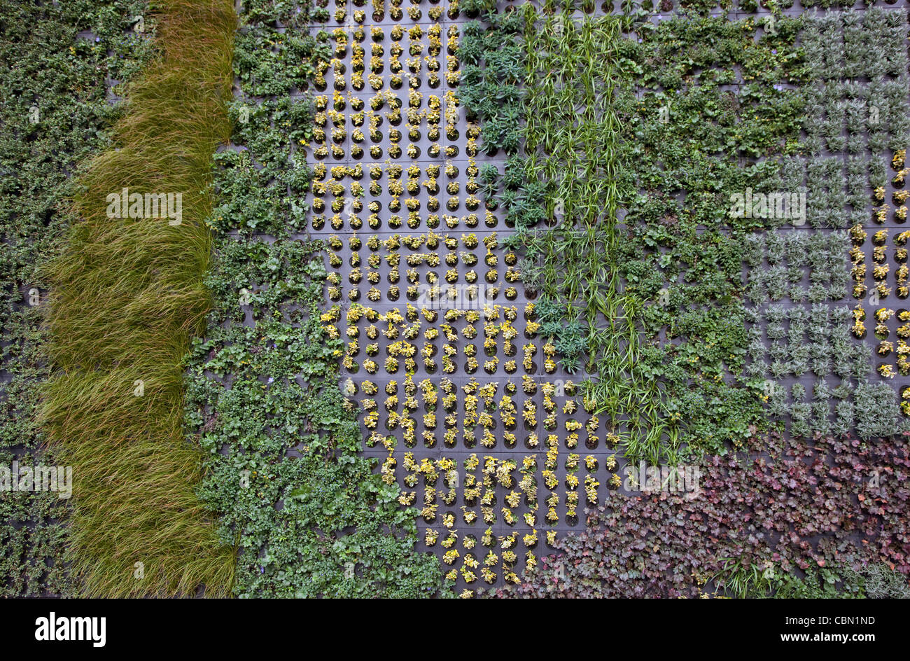 Vertical garden in Edgware Road, Central London to absorb traffic pollution - Stock Image
