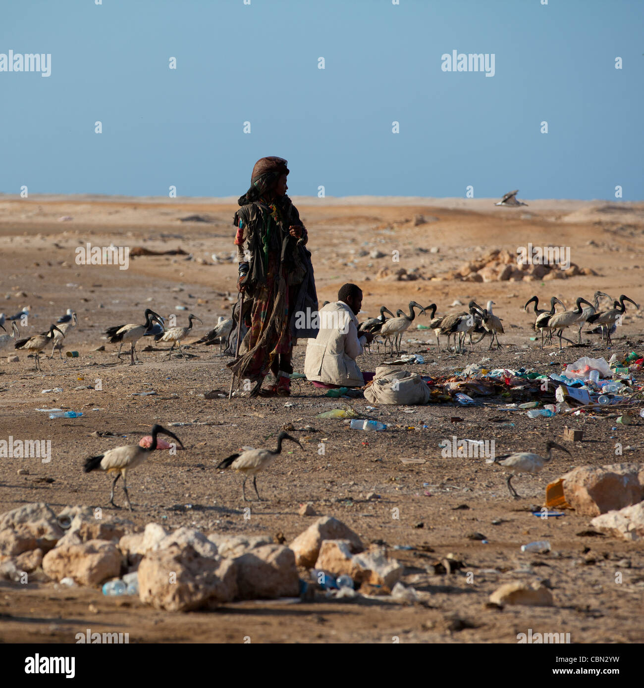 Wasteland Two Slumdogs And Birds In Berbera Somaliland - Stock Image