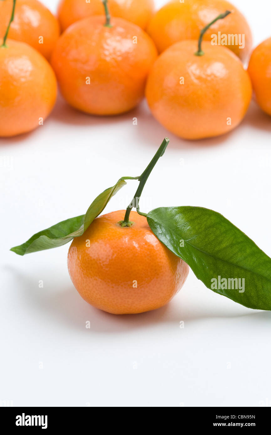 clementine oranges on a white background - Stock Image
