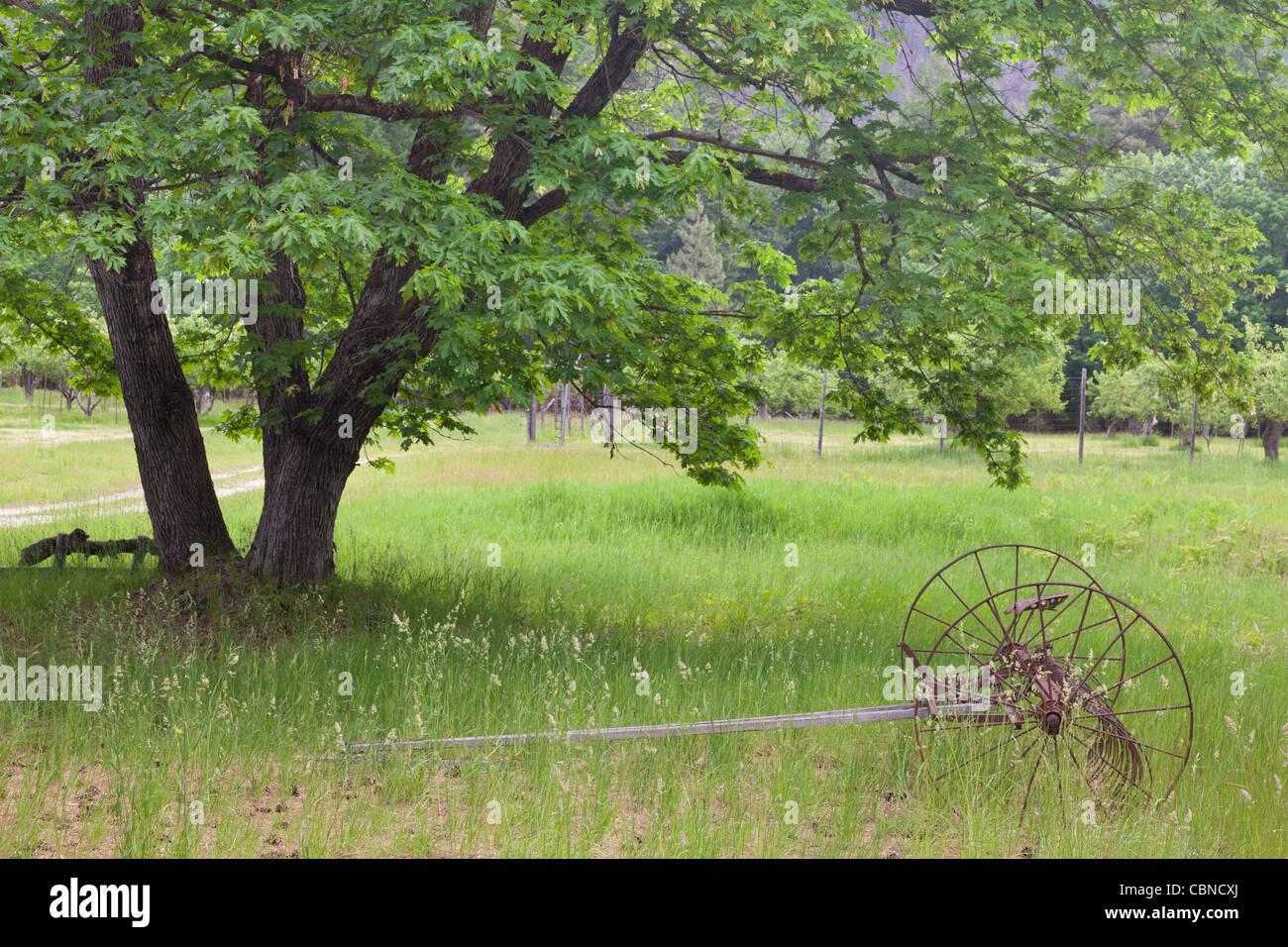 Farm field, Historic Buckner Orchard and Homestead North Cascades National Park, Washington - Stock Image