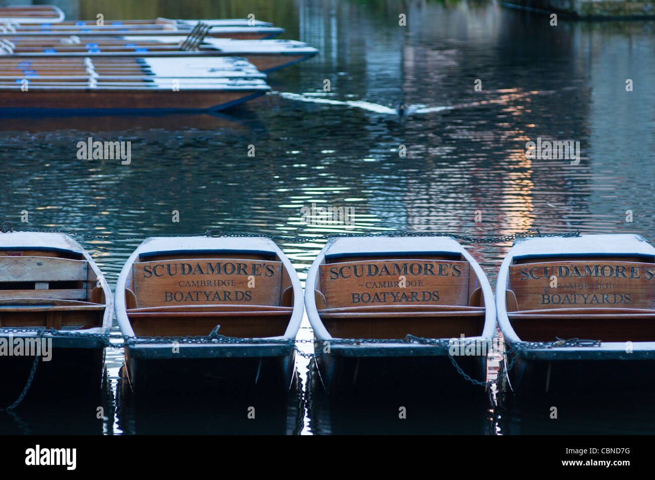 Punts on the river Cam in Cambridge, England. - Stock Image