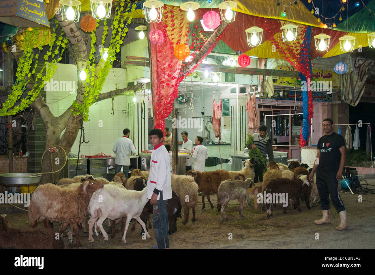 Sheep await their fate ahead of Eid el Adha, the Islamic Feast of Sacrifice, in Cairo - Stock Image