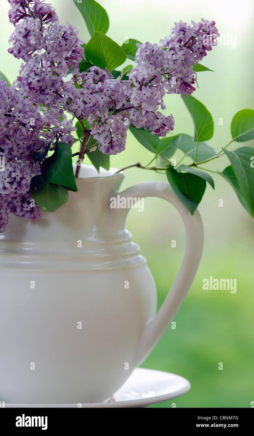 White Lilac Vase Stock Photos White Lilac Vase Stock Images Alamy
