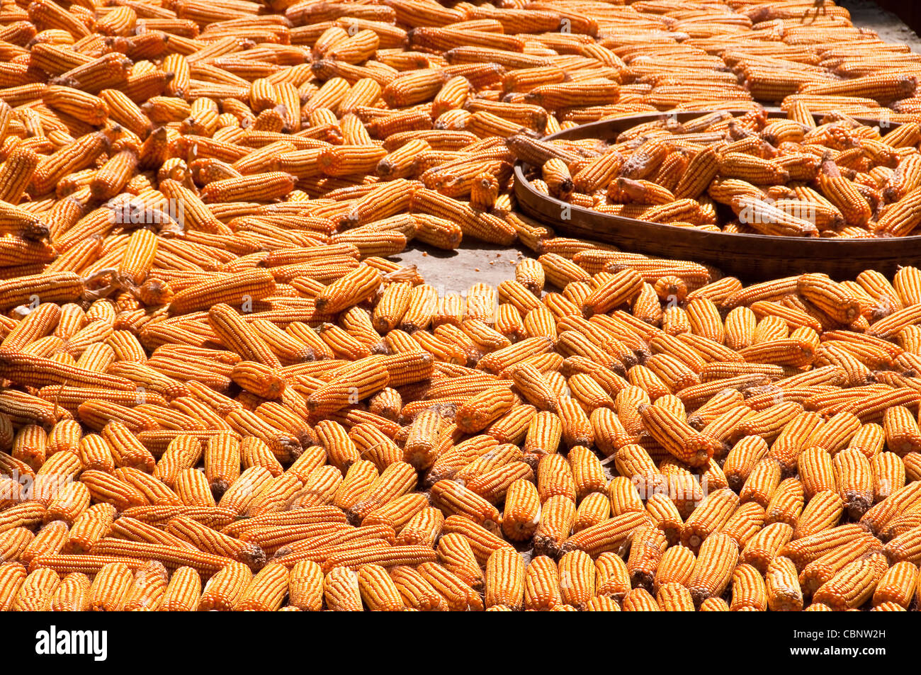 Corn drying in the sun - Village of Dazhai, Guangxi province (China) - Stock Image