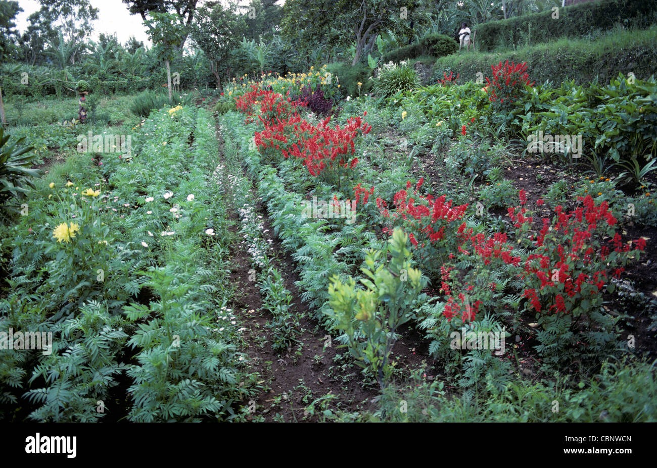 Well kept church mission garden with several types of flowering ornamentals, Marunga, Kilimanjaro - Stock Image