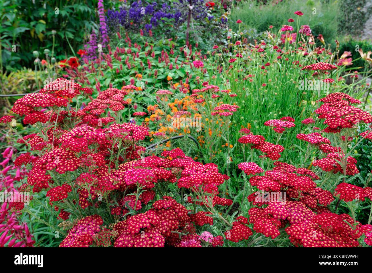Herbaceous Perennial Garden Stock Photos Herbaceous Perennial