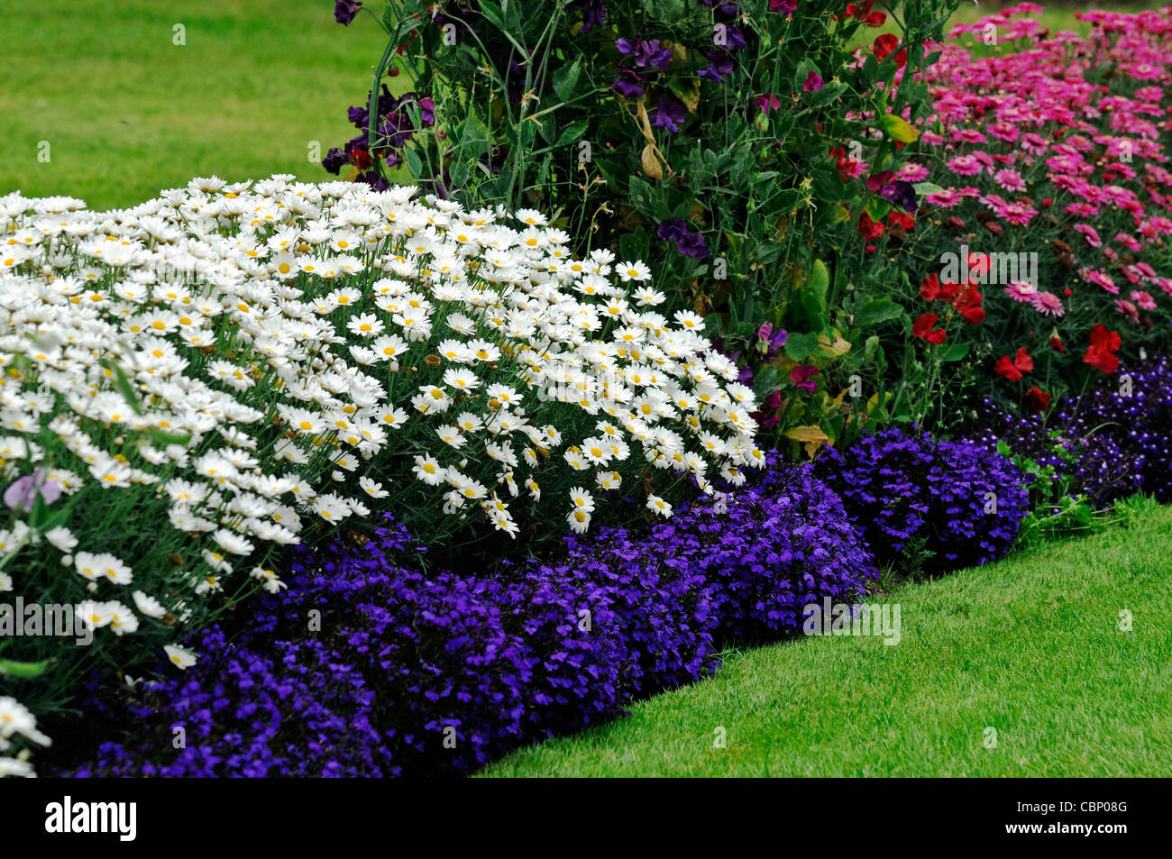 Perennials bed summer stock photos perennials bed summer stock summer flowering flowers herbaceous border bed flower plant planting mixed perennials colour color stock image mightylinksfo