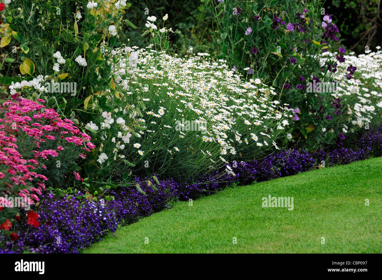 Summer flowering flowers herbaceous border bed flower plant planting summer flowering flowers herbaceous border bed flower plant planting mixed perennials colour color mightylinksfo