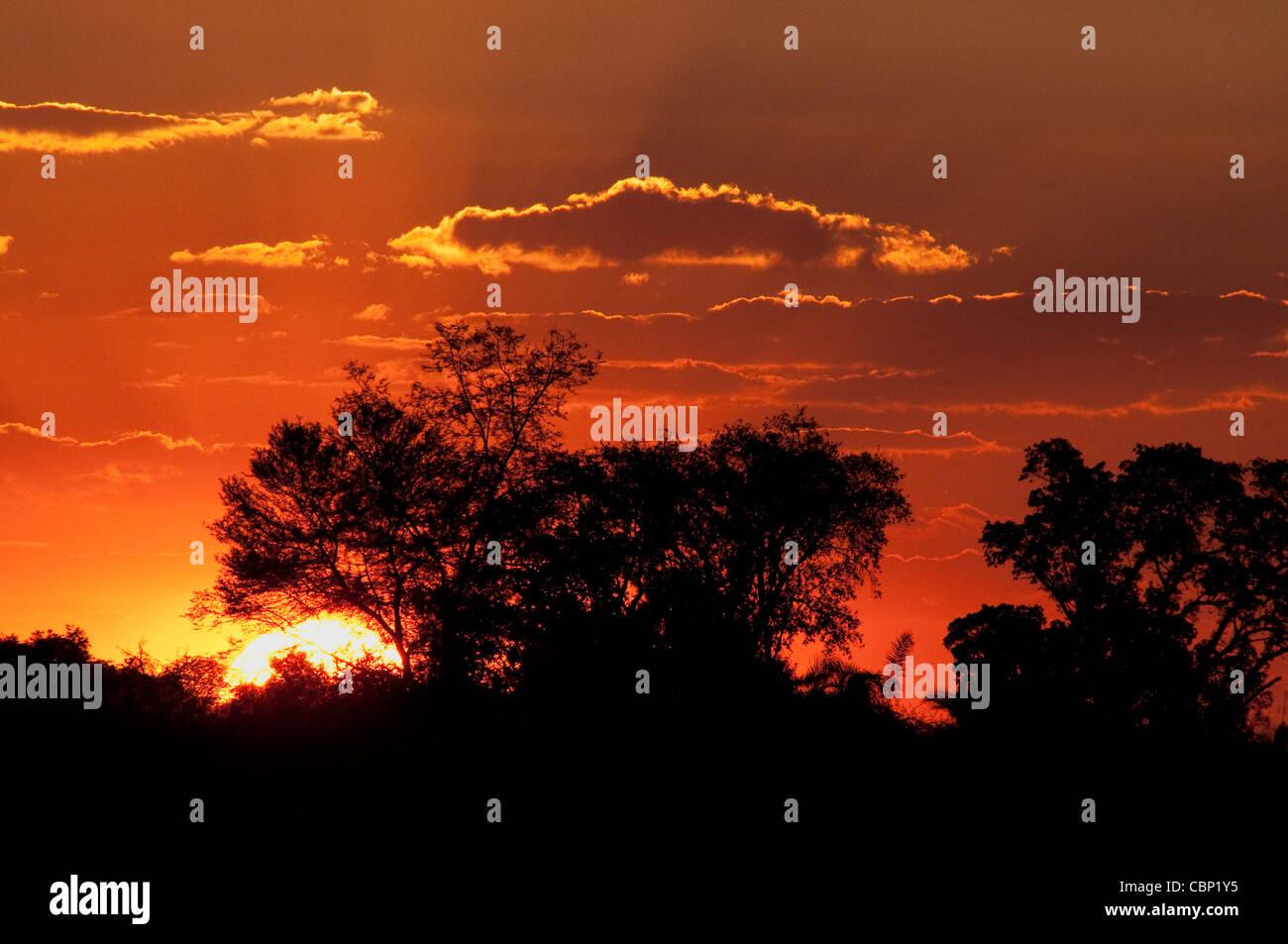 Sunset behind trees at Okavango Delta - Stock Image