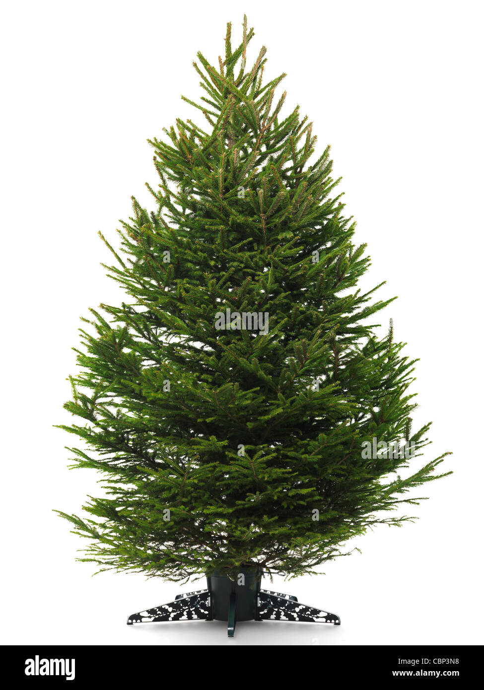 Undecorated Bare Real Christmas Tree On A Stand Isolated White Background