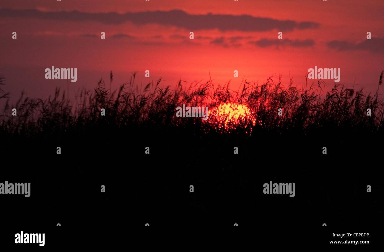 Africa Botswana Linyanti Reserve-Sunset through grasses - Stock Image