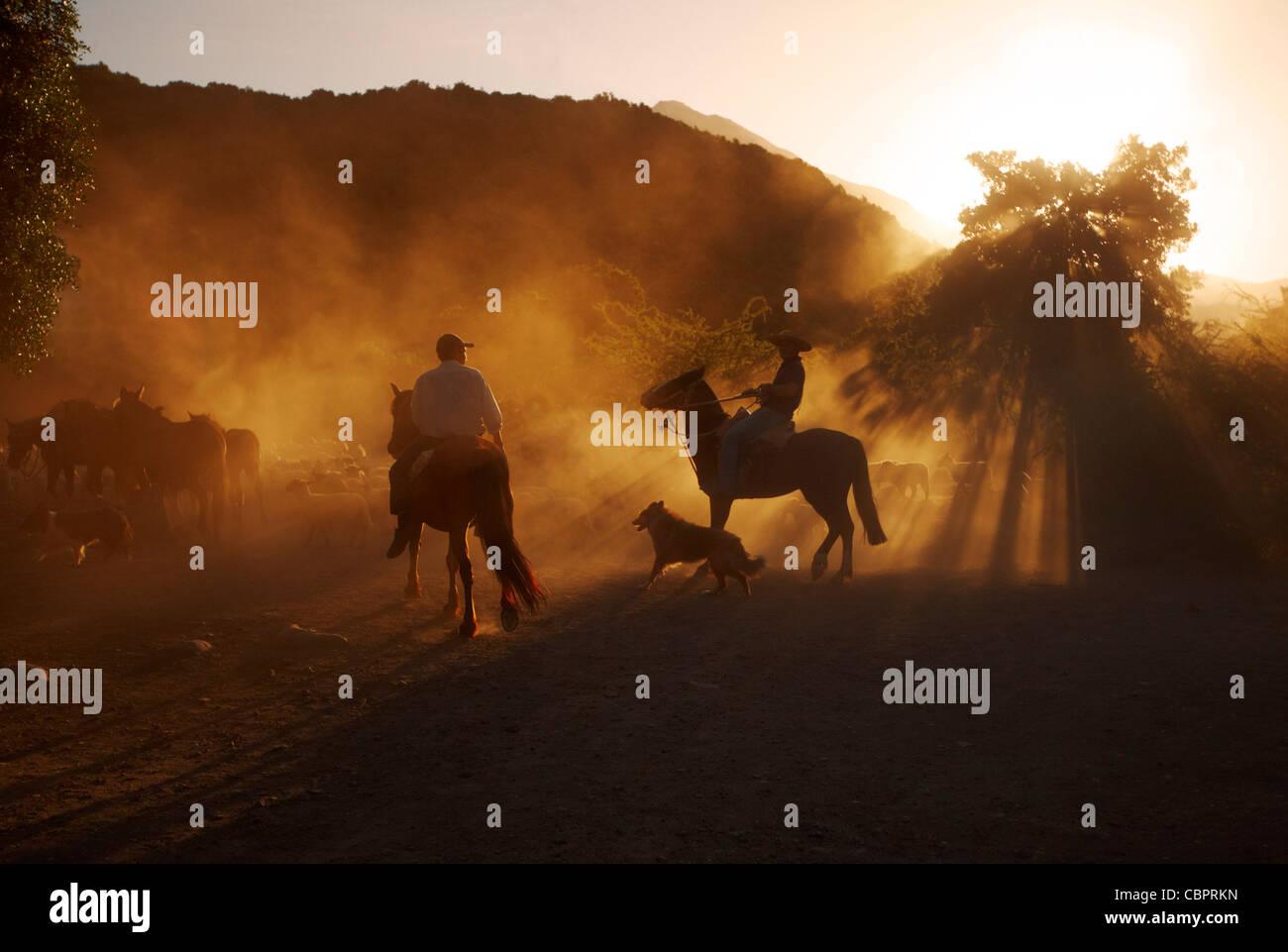 Huasos herding sheep at sunset in the Tumunan Valley, near San Fernando, Chile. - Stock Image