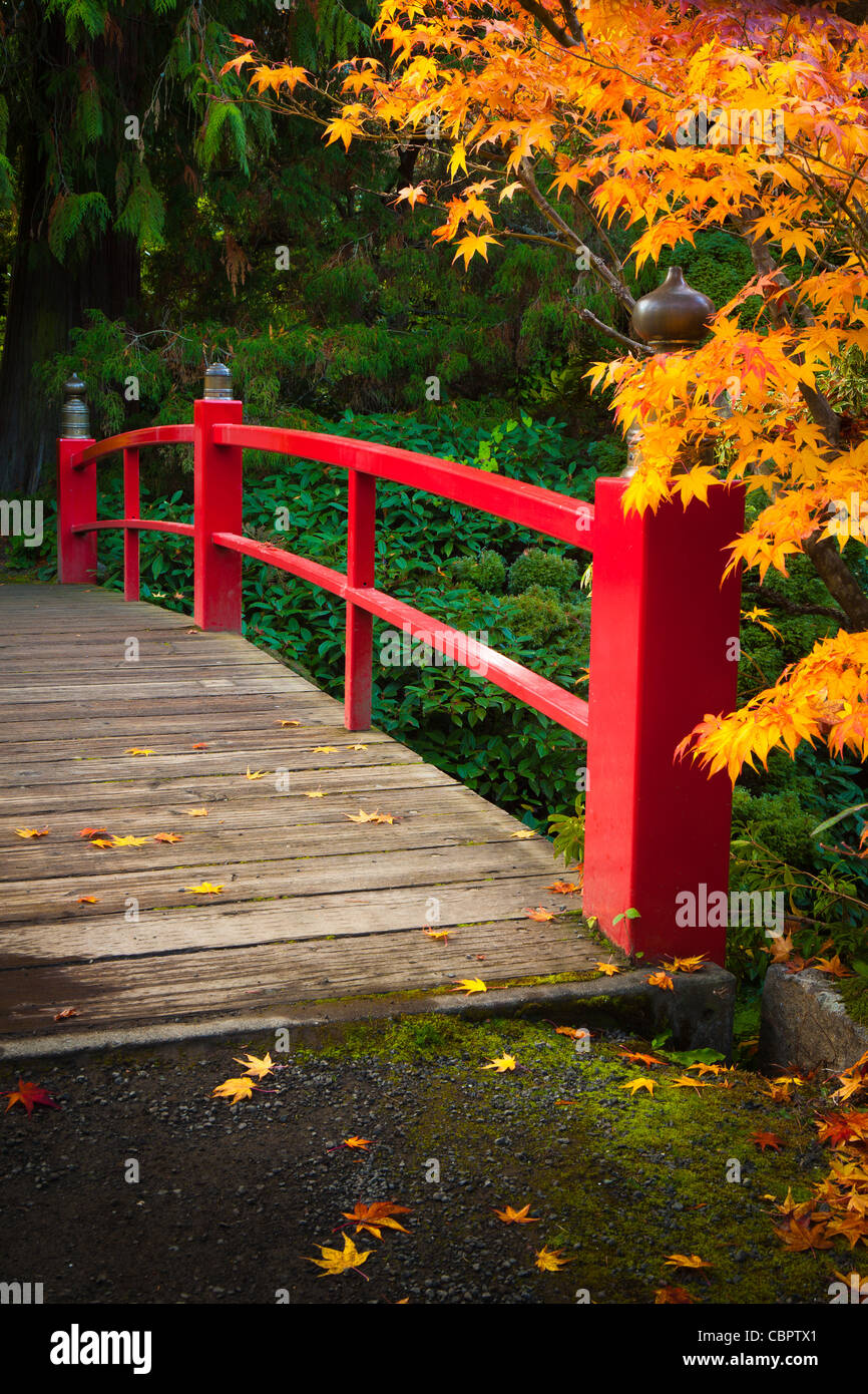 Footbridge across pond surrounded by maples in fall color, at Kubota Japanese Gardens, Seattle, Washington - Stock Image