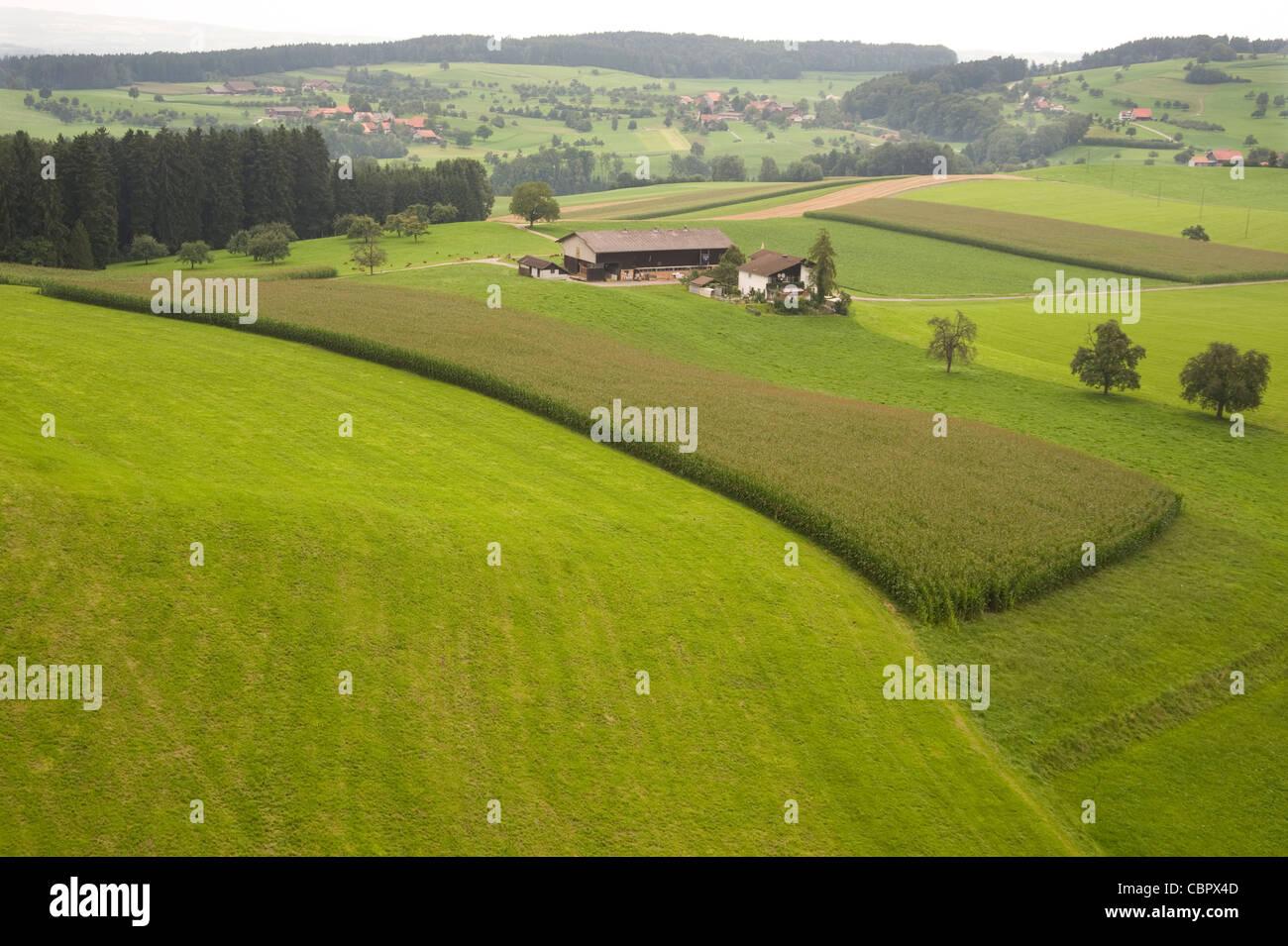 Grain field near Wil Switserland - Stock Image