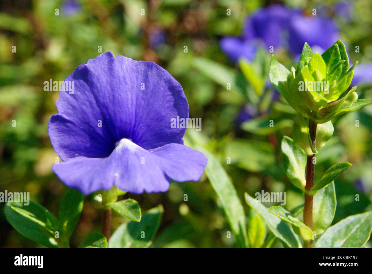 Unisexual flowers are found in