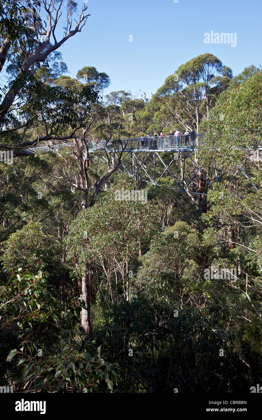 Tourists enjoying the Tree Top Walk, the Valley of the Giants, Walpole-Nornalup National Park, near Walpole, Western - Stock Image