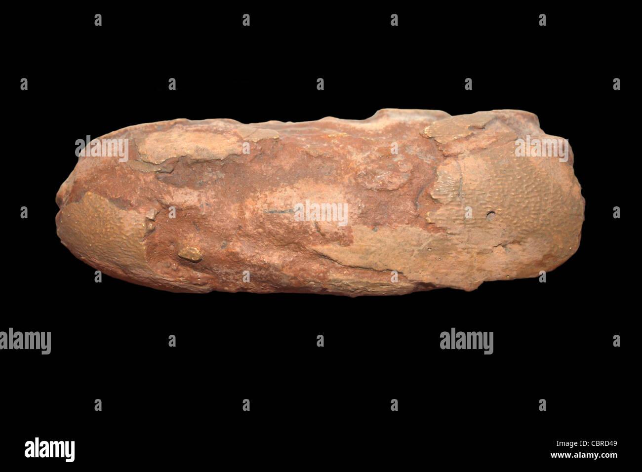 Protoceratops Egg Upper Cretaceous Period, Shabarakh Usu, Mongolia - Stock Image