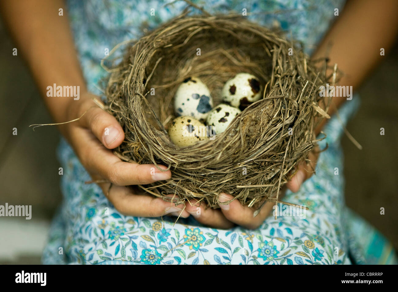 Girl holding bird's nest with speckled eggs. - Stock Image