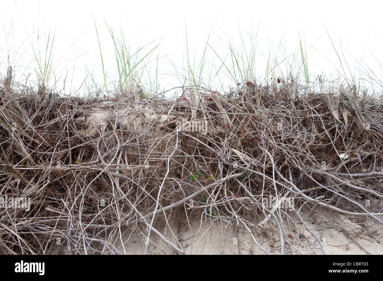 Dune with grasses, Cape Cod MA. - Stock Image